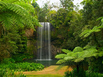 The Millaa Millaa falls Royalty Free Stock Image