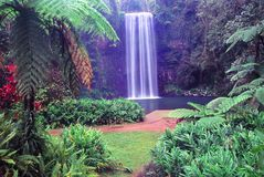 Millaa Millaa Falls - Australia Royalty Free Stock Photos