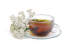 Millefoglio 01 del tè Fotografie Stock