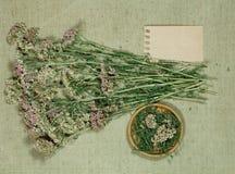millefoglio Asciughi le erbe Medicina di erbe, erbe medicinali di fitoterapia Fotografia Stock
