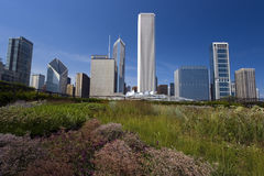 From Millenium Park Royalty Free Stock Image
