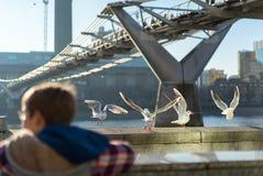 Milleniumbro på Thames River London Royaltyfria Bilder