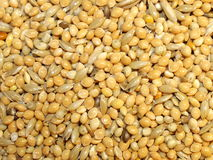 Millet Stock Images