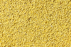 Millet. The background of yellow millet Royalty Free Stock Image