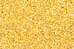Millet. The background of yellow millet Royalty Free Stock Photography