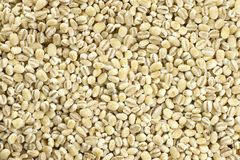 Millet Background Royalty Free Stock Photo