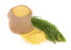 Millet in a bag with green spikelets isolated on white background Stock Photos