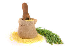 Millet in a bag and scoop with green spikelets isolated on white background Royalty Free Stock Image
