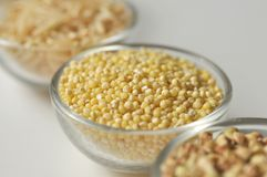 Millet - gluten free grain. In a glass bowl, close-up stock images