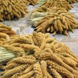Millet Grain Stock Images