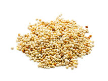 Millet grain isolated Royalty Free Stock Photo