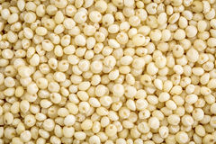 Millet grain life size background Royalty Free Stock Photos