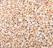 Millet grains for background Stock Photos