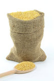 Millet grains in burlap bag and over wooden spoon. Stock Photos