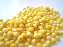 Millet grains. Peeled millet grains on the white background royalty free stock photography