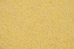 Millet groats Stock Images