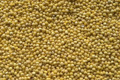 Millet groats Royalty Free Stock Photos