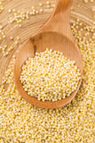 Millet groats Stock Photos
