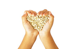 Millet in hand isolate on white. Royalty Free Stock Photo