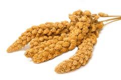 Millet, nourriture pour oiseaux Photo stock