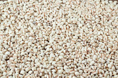 Millet the organic grain food. Stock Photography