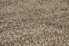 Millet Seed Background Day Many Stock Photo