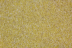 Millet seeds Royalty Free Stock Image