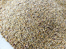 Millet seeds stock image