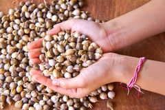 Millet seeds Stock Photography