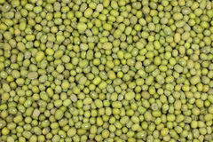 Millet seeds green  background Royalty Free Stock Photos