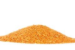 Millet seeds (Panicum miliaceum). A pile of millet seeds (Panicum miliaceum Royalty Free Stock Images