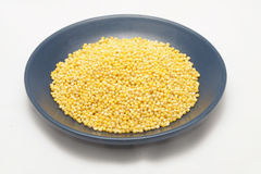 Millet seeds in plate. Millet seeds in blue plate isolated stock photography