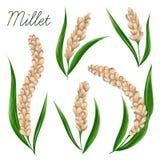 Millet set. Collection decorative floral design elements. Stock Images