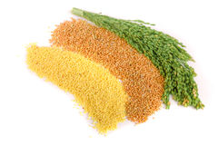 Millet in spikelet and peeled isolated on white background Stock Photo