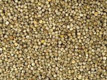 Millet Texture Royalty Free Stock Photo