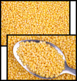 Millet. two photos for the background Stock Photos