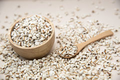 Millet is useful cereal Royalty Free Stock Photos