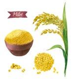 Millet watercolor illustration set Stock Photos