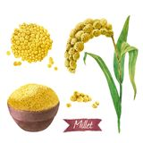 Millet watercolor illustration set stock photography