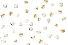 Millet on white color background and clipping path. stock photography