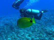 milletseed butterflyfish Стоковые Фото