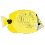 Milletseed-Butterflyfish-Vektor-Illustration Lizenzfreie Stockbilder