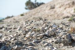 Milliarde jährige Oberteile auf dem Strand Stockfotos