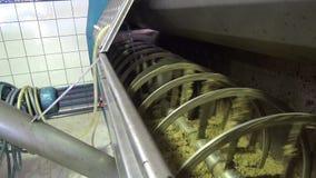 Milling Olives (5)