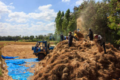 The milling rice. The farmers milling the rice on the stack on 26 november 2015 at 13.00 pm Royalty Free Stock Photography