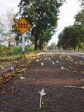 Millingtoniahortensis de Witte bloemen en de kleine bloemendaling op de kant van de weg En het gele routeteken En groene bomen bi stock foto's