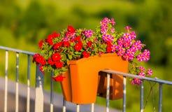 Million de détail de fleur de cloches Fleurs rouges et pourpres d'été Belles usines dans le jardin Décoration pour la maison d'ét Images libres de droits