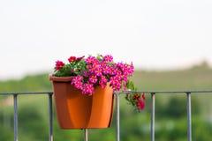 Million de détail de fleur de cloches Fleurs rouges et pourpres d'été Belles usines dans le jardin Décoration pour la maison d'ét Image libre de droits