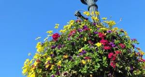 Million de fleur de Bells en été Photographie stock libre de droits