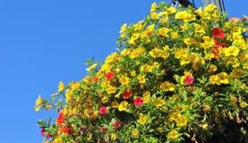 Million de fleur de Bells en été Images stock